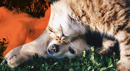 Image of Dog and Cat Playing