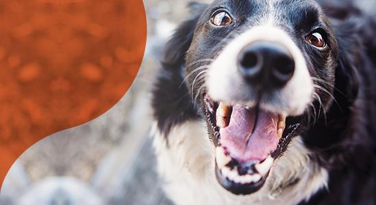 Image of Happy Dog