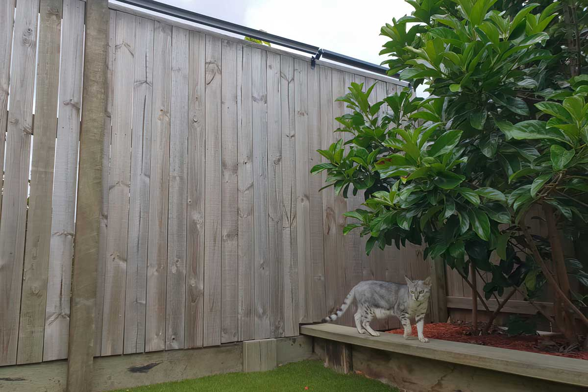 Image of tabby cat with Oscillot cat containment on fence